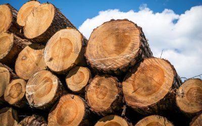 10 fatos interessantes sobre a madeira